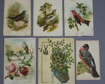 Vintage BIRD CARDS- Bird Collection- Paper Ephemera- Framable Cards- Blackbird Cuckoo- Antique Cards