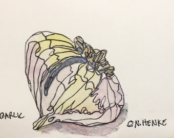 Garlic Original Watercolor ACEO by Nan Henke, sometimes known as an ATC (Artist's Trading Card) 170101