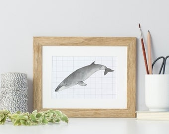 Watercolour whale print, whale painting, fin whale illustration, mini print, watercolour whale, geometric pattern, small print, fin whale