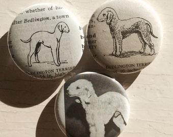 Bedlington Terrier Vintage Dictionary Illustration Magnet Set of 3