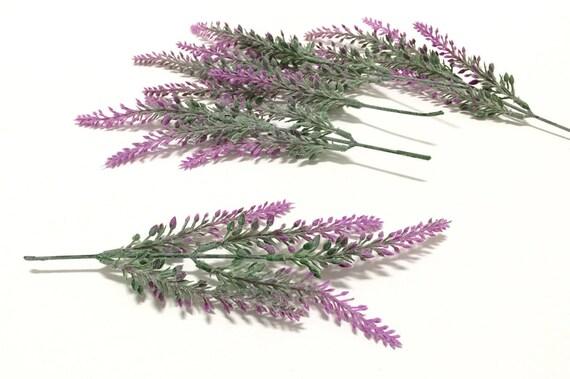 Stapelia erectiflora ~ PLANTUKIS