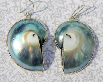 Gorgeous Nautilus Shell Earrings!!!!!