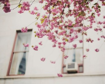 Pink Blossoms - Fine Art Photograph, Pink, Flowers, Nature, Spring