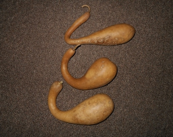 3 small dried dipper gourds.
