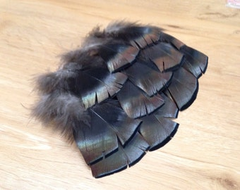 EIGHT Merriam's Wild Turkey feathers