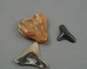 Destash Real Shark Teeth
