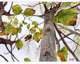 Winter Elm Tree Watercolor Painting