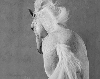 The White Stallion Whirls - Fine Art Horse Photograph - Fine Art Print - Horse - Lusitano