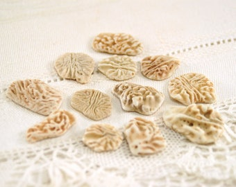 12 fossilized sand dollar inner pieces (no.60)