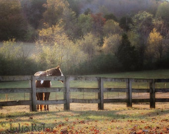Horse and Fence in Fall Color Photograph