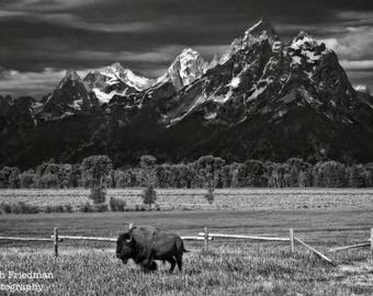 Bison and the Grand Teton Mountains Landscape Photography Grand Teton National Park Buffalo Mountain Wyoming Black and White Photograph