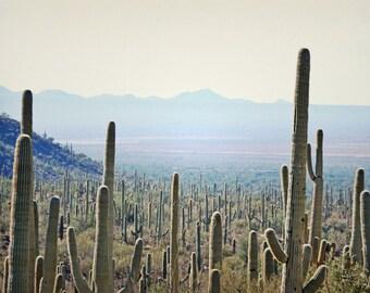 Desert Cactus Photography Print Fine Art Arizona Saguaro Cacti Mountain Sunset Rustic Southwest Winter Landscape Photography Print.