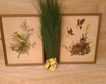 Vintage framed bird pictures - Yellow Breasted Chat bird - Cedar Waxwing - bird nature pictures - wildlife - bird wall art - vintage birds