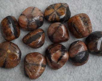 Chiastolite Set of 2 Tumbled Andalusite Cross Stone Brown Crystals Stones Minerals (CRYT-CHI-ML)