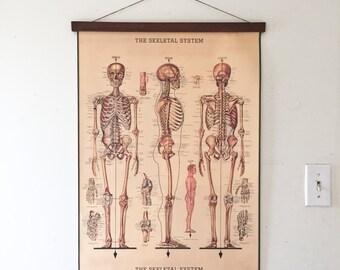 Magnetic Poster Holder and Vintage Skeletal System Illustration Walnut Hanger Wooden Poster Hanging Photo Frame Anatomy Print