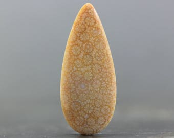 50mm Teardrop Agatized Coral Natural Fossilized Cabochon Gemstone Fossil, Petoskey Stone (CA7761)