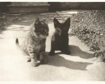 "Vintage Snapshot ""Blackie & Peanut"" Kittens Kitty Shadows Tabby Cat Black Cat Kitty Cats Found Vernacular Photo"