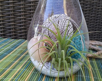 Beach terrarium - Air plant terrarium - DIY terrarium - Hanging glass terrarium - Blue - Air planter - Tillandsia -  Glass terrarium