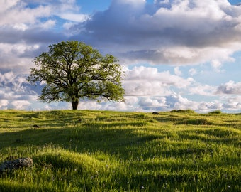 Daydream, Landscape Photography, Storm Clouds, Nature Photography, Nature, Springtime, Clouds, Landscapes