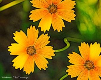 Flower Photograph, Nature Photography, Nature Wall Art, Wildflower Art, Flower Art Print, Flower Artwork, Yellow, Orange, Wildflower Print
