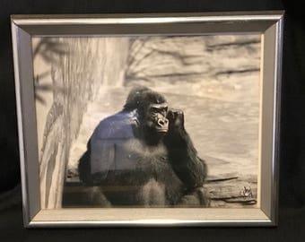 Gorilla Black and White Photography