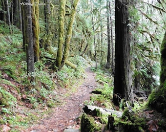 Brice Creek Forest Path, DIGITAL DOWNLOAD, hiking trail , forest decor, umpqua nat. forest, Fine Art Photography by Sharon at HikingTrails