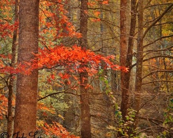 Autumn, Fall, Autumn Photography, Fall Leaves, Fall colors, Mountains, North Carolina, Wall art, Orange Brown,Nature Photography, Landscape
