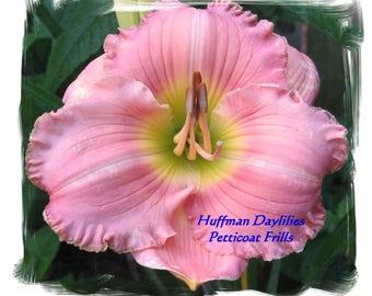 "Daylily, ""Petticoat Frills"", double fan, perennial"