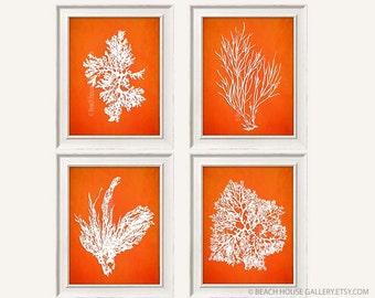 Orange White Bedroom Art, Antique Coral Illustration, Tangerine Wall Art, Orange Sea Coral, Orange Living Room Art, Orange Coral Art
