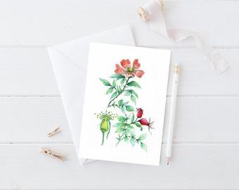 "Botanical Stationery Set, Watercolor Greeting Cards, Botanical Card Set of 4, ""Wild Rose"""