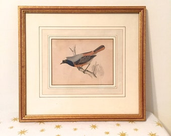 Antique, beautiful engraving of bird called a Redstart by Morris, dating from 1800s, framed and mounted