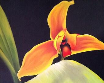 Lycaste Skinneri Orchid