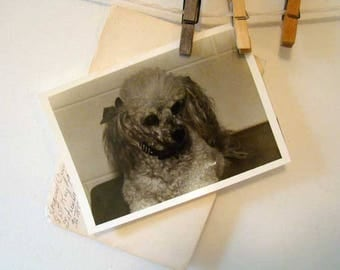 Vintage Poodle photography, black and white Poodle photo, old Poodle dog photograph