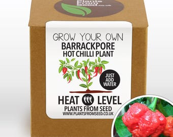 Grow Your Own Barrackpore Chilli Plant Kit