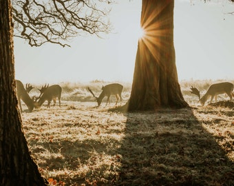 Breakfast time for the deer 18x12 inch photographic print