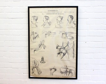 Early 20th Century Framed Anatomical Chart Circa 1900