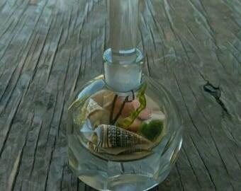 Marimo and Java Moss Terrarium - Live plants - Vintage Art Deco Crystal Perfume Bottle