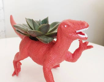 Dinosaur planter for cactus succulents airplants