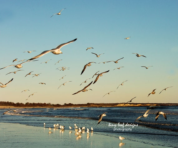 Seagulls Soaring Narragansett Beach Rhode Island Original Photography