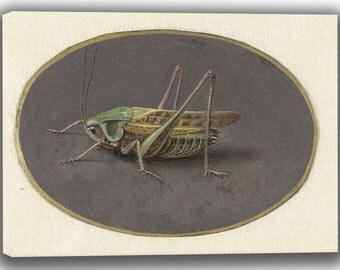 Jan Augustin van der Goes: Grasshopper. Fine Art Canvas. (04068)