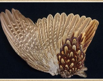 """Pheasant wing 8"""" X 11 1/2"""" from a Ringneck rooster pheasant    #037"""