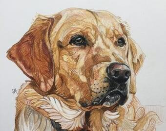 Custom Pet Portrait Drawing Dog, Cat, Animal