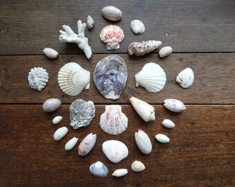 Antique / Vintage Ethical Sea Shell Collection