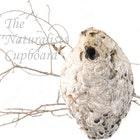NaturalistsCupboard