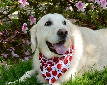 Personalized Lady Bug Pet Bandana || Reversible Red with random black dots Dog Scarf ||  Custom Puppy Gift by Three Spoiled Dogs