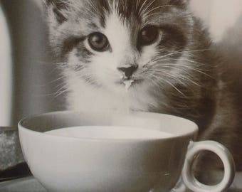 Kitten Cards, black and white photography, blank cards, cat cards
