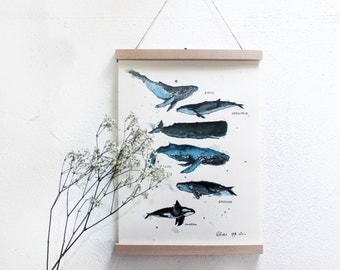 Whale species poster | Illustration | Art print watercolor painting | A3 print
