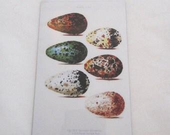 Bird Eggs Magnet