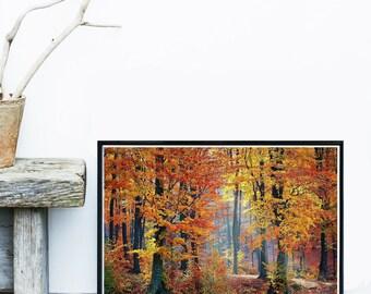 Forest Art Print, Autumn Print, Forest Photo, Tree Print,  Home Decor, Giclee Art Print, Wall Art, Wall Decor