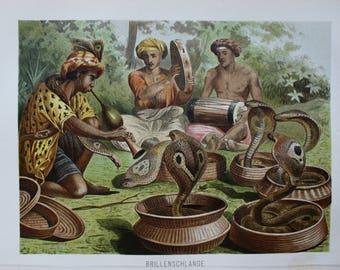 antique print cobra snake 1895